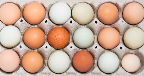 jajka Jakie jajka kupować?