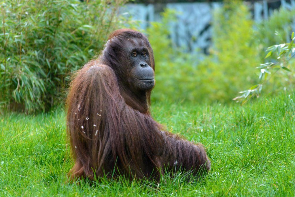 animal 1329438 1920 1024x683 Międzynarodowy Dzień bez Oleju Palmowego   co z nim nie tak?
