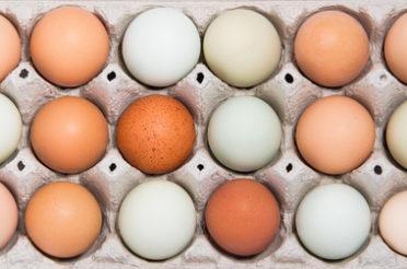 Jakie jajka kupować?